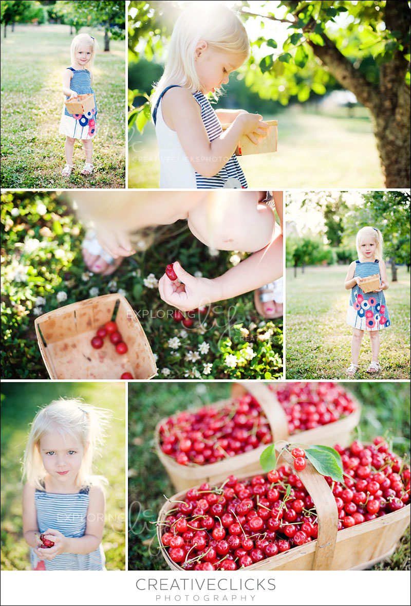 Grimsby Cherry Orchard Photography